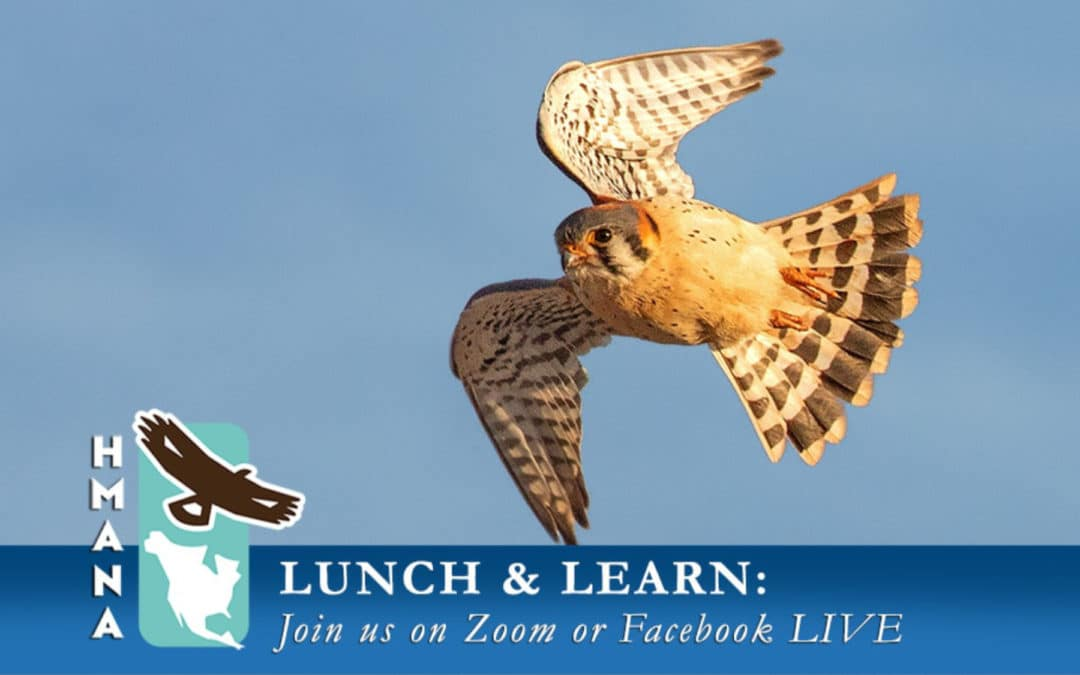 """HMANA Virtual """"Lunch & Learn"""" Series – Topics and Schedule"""