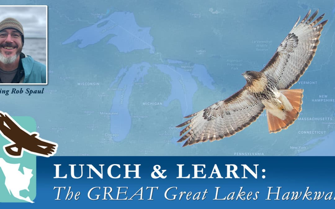 Virtual Lunch & Learn Series – GREAT Great Lakes Hawkwatch